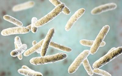 L'influence du microbiote intestinal sur le psychisme